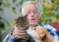 Amour de chien et de chat Photo libre de droits