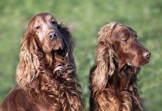 Amour de chien et soin, beaux chiens velus images stock