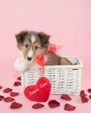 Amour de chiot Photo stock
