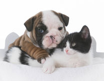 amour de chiot et de chaton Images stock