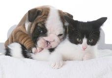 amour de chiot et de chaton Photo libre de droits