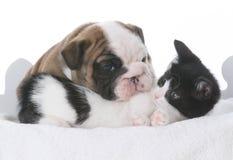 amour de chiot et de chaton Photographie stock libre de droits