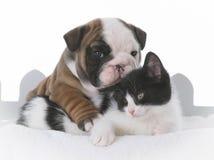 amour de chiot et de chaton Image stock