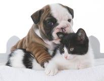 amour de chiot et de chaton Photos libres de droits