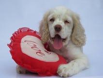 Amour de chiot Valentine Photo stock