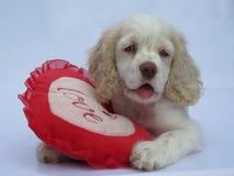 Amour de chiot Valentine Photos stock