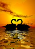 Amour de cygne dans le coucher du soleil Photographie stock
