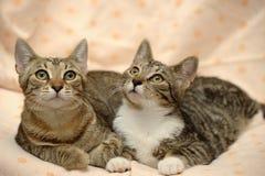 amour de deux chats, Photos stock