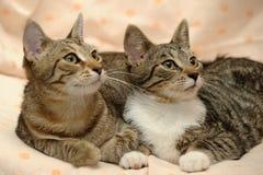 amour de deux chats, Image stock