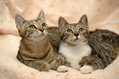 amour de deux chats, Photo libre de droits