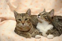 amour de deux chats, Images stock