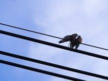 Amour de deux petit oiseaux, avec un autre oiseau Images stock