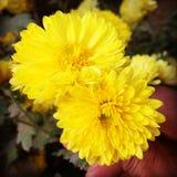 Amour de fleur Photographie stock libre de droits
