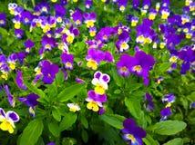 Amour de fleurs dans l'oisiveté Photographie stock