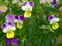 Amour de fleurs dans l'oisiveté Photos stock