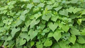 Amour de forêt au Nigéria Afrique Image stock