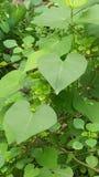 Amour de forêt en Afrique Images stock