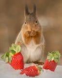 Amour de fraise Photographie stock libre de droits