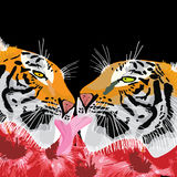 Amour de langue de tigre Photo stock