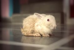 Amour de lapin Photographie stock libre de droits