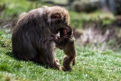 Amour de mères Images stock