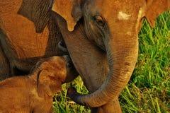 Amour de mères Photos libres de droits