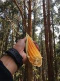 Amour de maïs ! Images stock