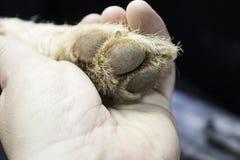 Amour de main et de chien Photos libres de droits