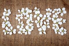 Amour de mot effectué à partir des fleurs Photos stock