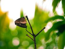Amour de papillon Photographie stock libre de droits