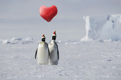 Amour de pingouin Photo stock
