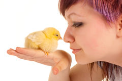 Amour de poulet Photo libre de droits