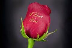 Amour de Rose Photo libre de droits