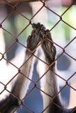 Amour de singe Photo stock