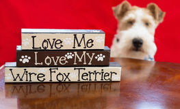 Amour de Terrier Photo stock