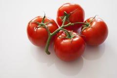 Amour de tomate Photographie stock libre de droits
