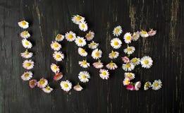 Amour de Word écrit avec des fleurs de marguerite Images stock