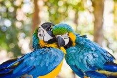 Amour des animaux Photo libre de droits