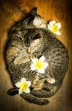 Amour des chats Photographie stock