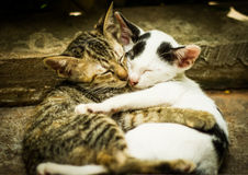 Amour des chats Photos stock