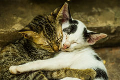 Amour des chats Photographie stock libre de droits