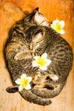 Amour des chats Photo libre de droits