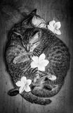 Amour des chats Photo stock