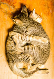 Amour des chats Images libres de droits