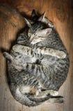 Amour des chats Photos libres de droits