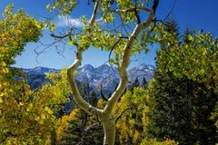 Amour des montagnes Photo libre de droits