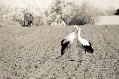 Amour des oiseaux Photo libre de droits