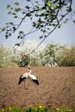 Amour des oiseaux Photos libres de droits