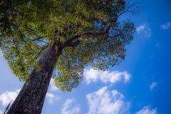 amour du ciel 0f Image libre de droits