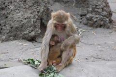 amour du ` s de Singe-mère Image libre de droits